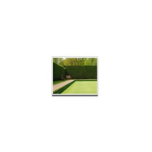 Bowling Green / Croquet Lawn